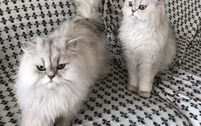 Dexter and Django