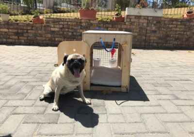 GlobalPaws-Pet-travel-crates-Gallery-01