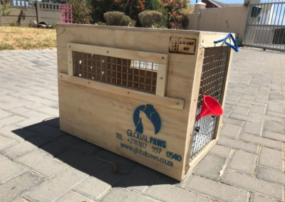 GlobalPaws-Pet-travel-crates-Gallery-02