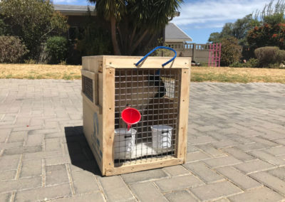 GlobalPaws-Pet-travel-crates-Gallery-05