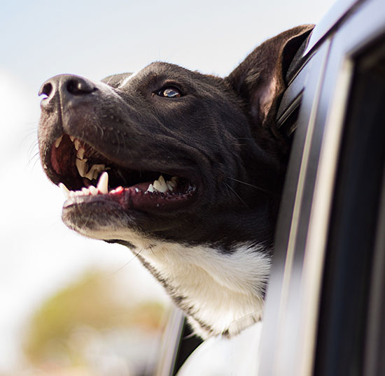 Global Paws | Animal travel services | professional Pet