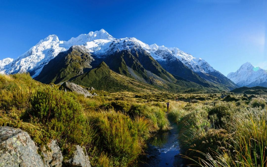 How difficult is it to take pets to New Zealand?