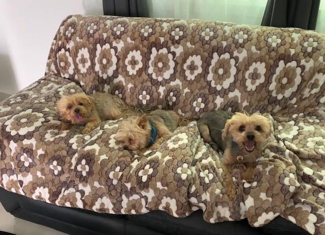 Manasa, Butch and Sashi