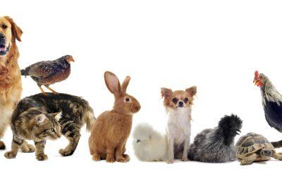 International Pet Week