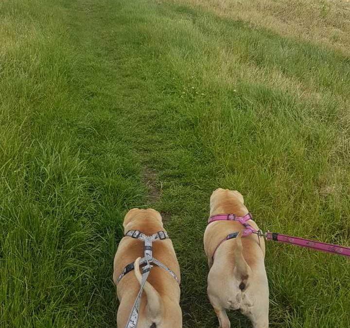 Zara and Zeus