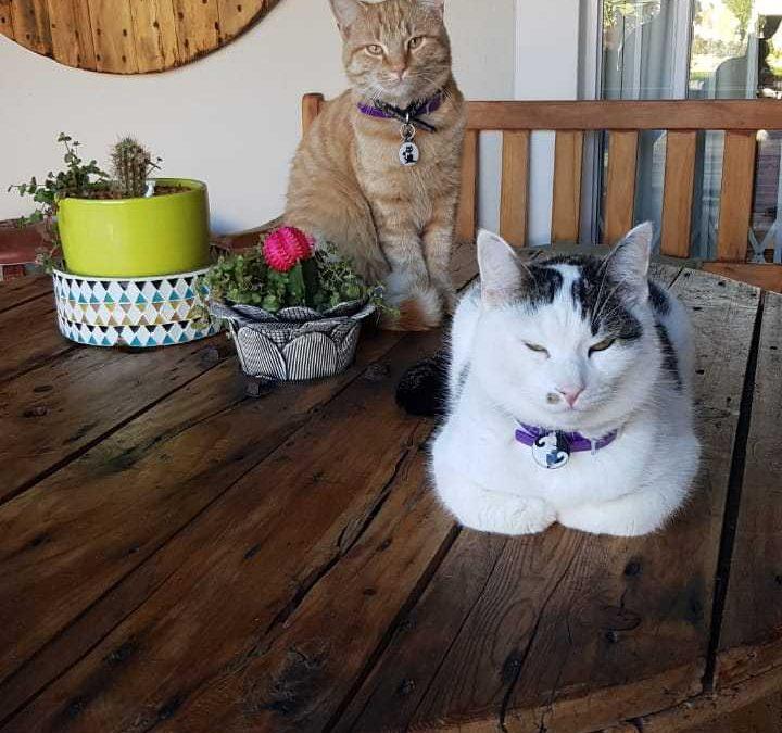 Oscar and Pepper