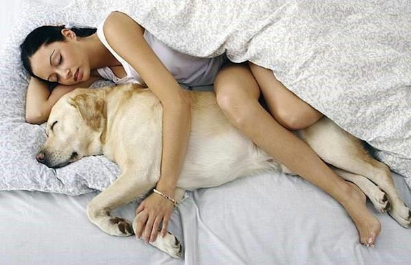 """"""" Dogs, A Woman's Best Friend """""""