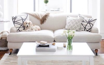 Creating a Safe and Comfortable Living Space for your Pet!