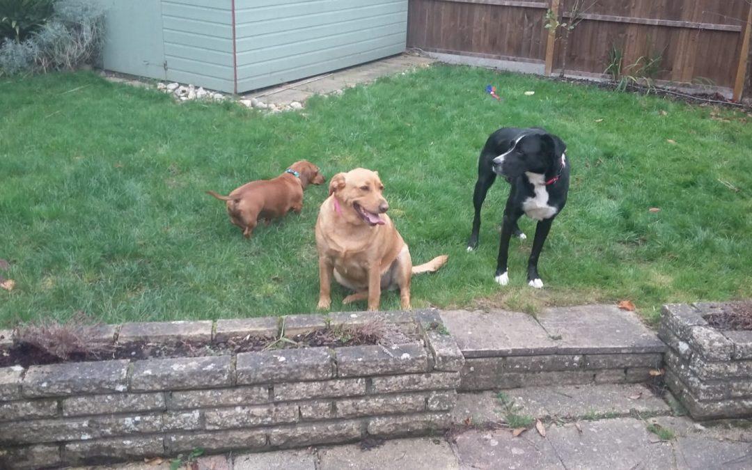 Bosco, Ella and Castiel