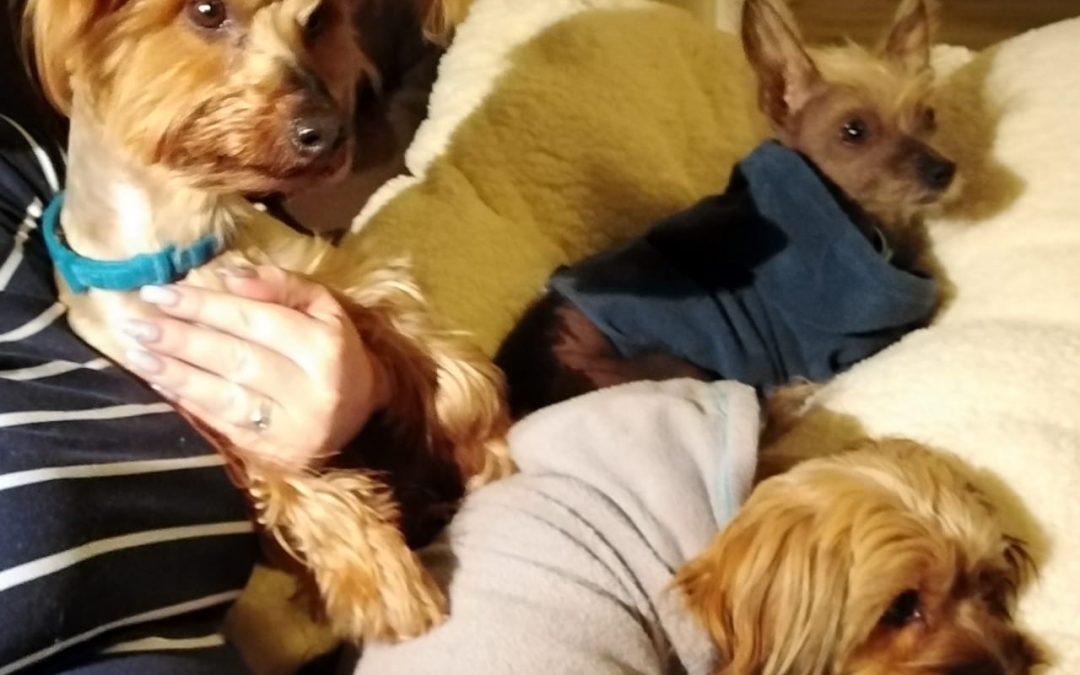 Gizmo, Flappie and Karel
