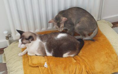 Puki, Mia & Koko